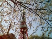 tokyotowor_sakura_070330